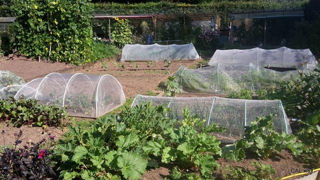 Praktische Tipps zur Erzeugung von Bio-Gemüse