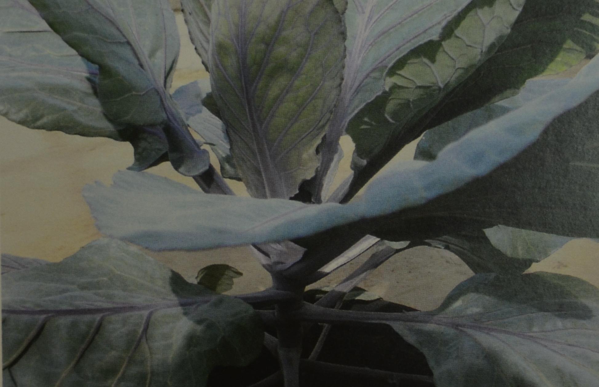 Der Gemüsegarten auf Balkon und Terrasse X