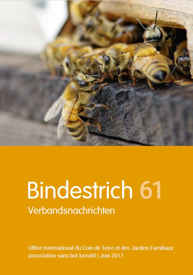 Office International - Bindestrich 61