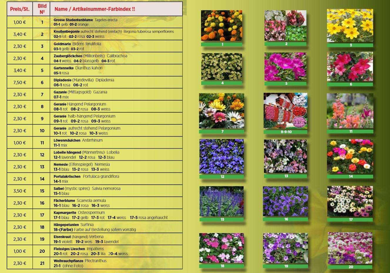 Brochure PDF CTF Ouljen 2