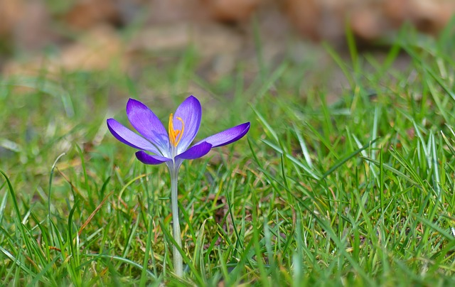 Jardinage en avril
