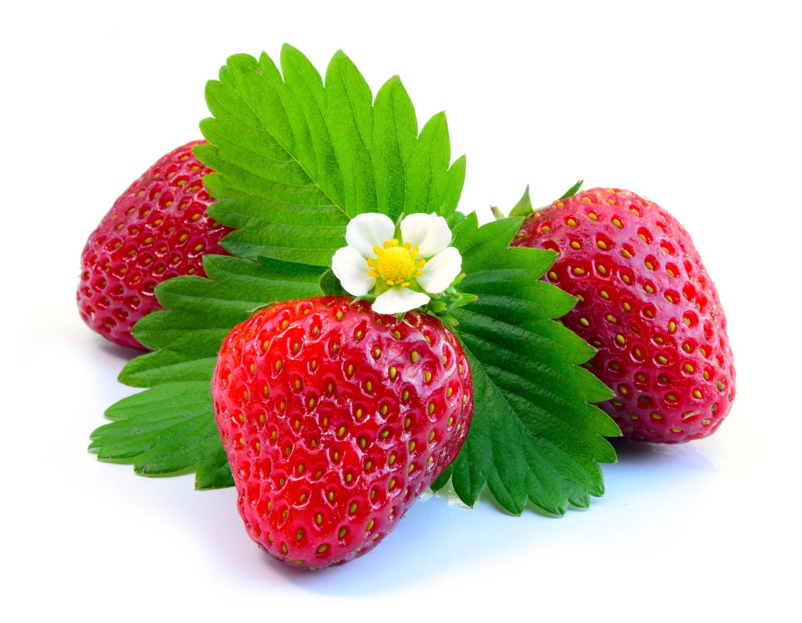 Fiche de renseignements des fraises