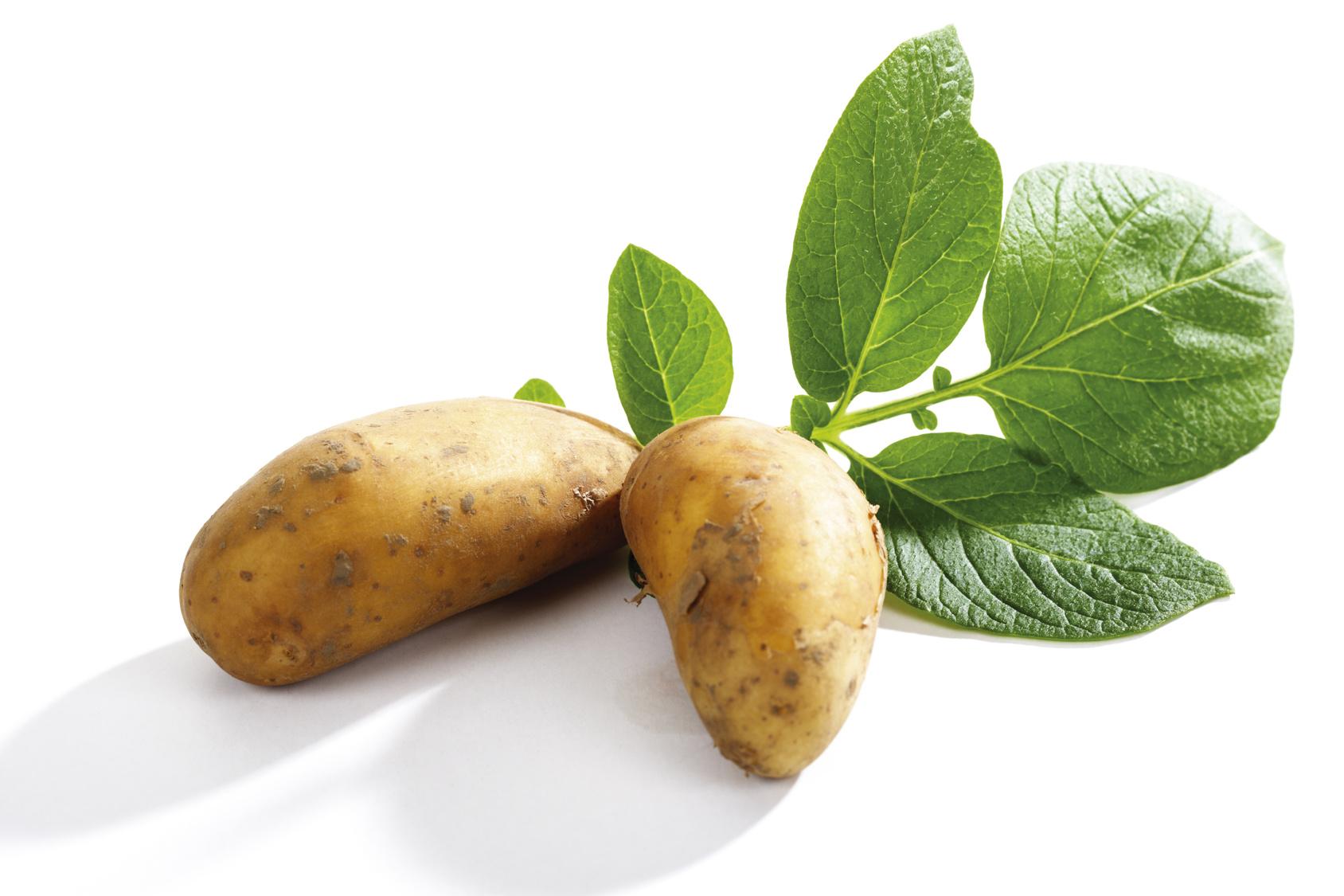 Fiche de renseignements des pommes de terre