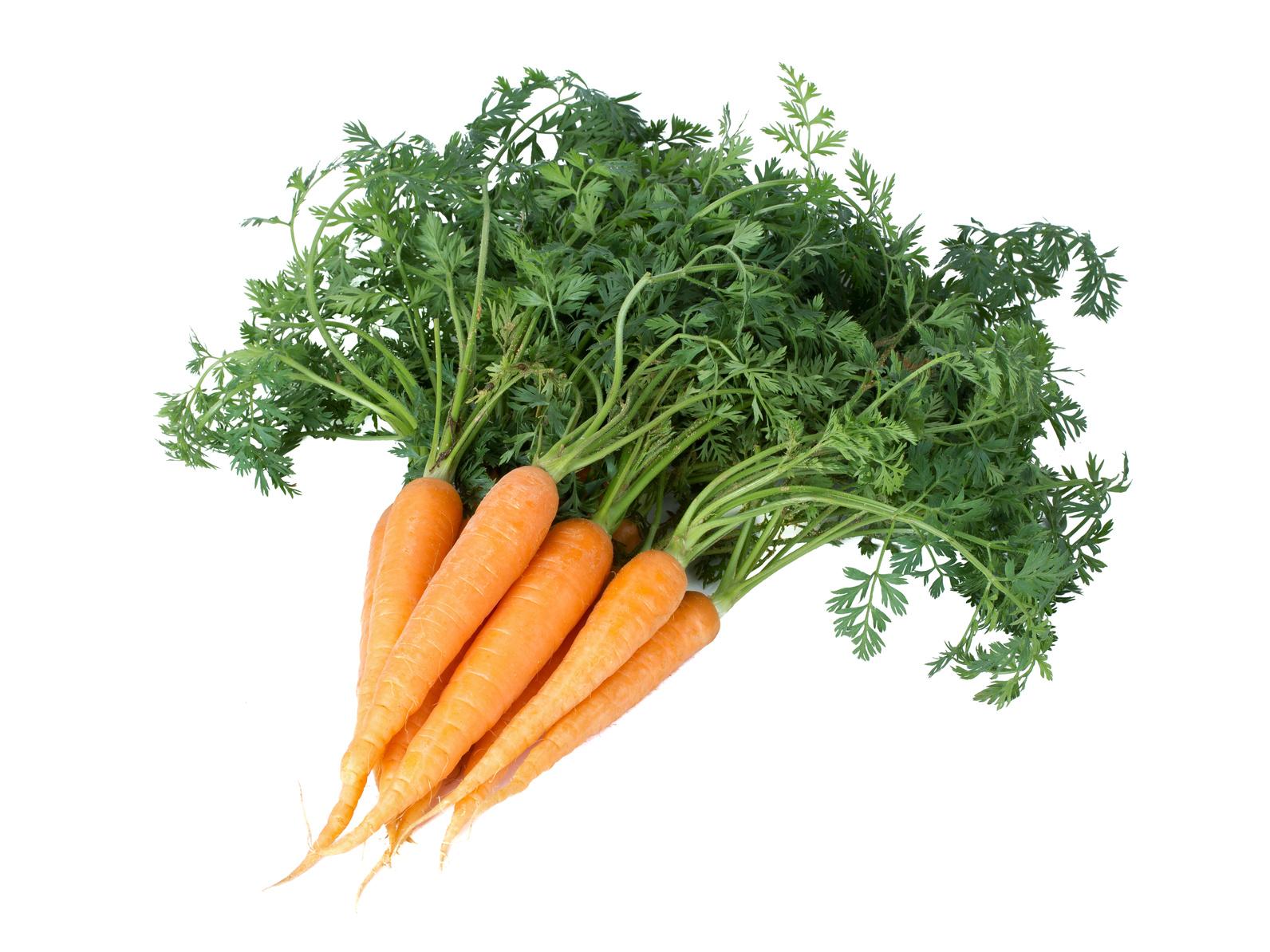 Fiche de renseignements des carrottes