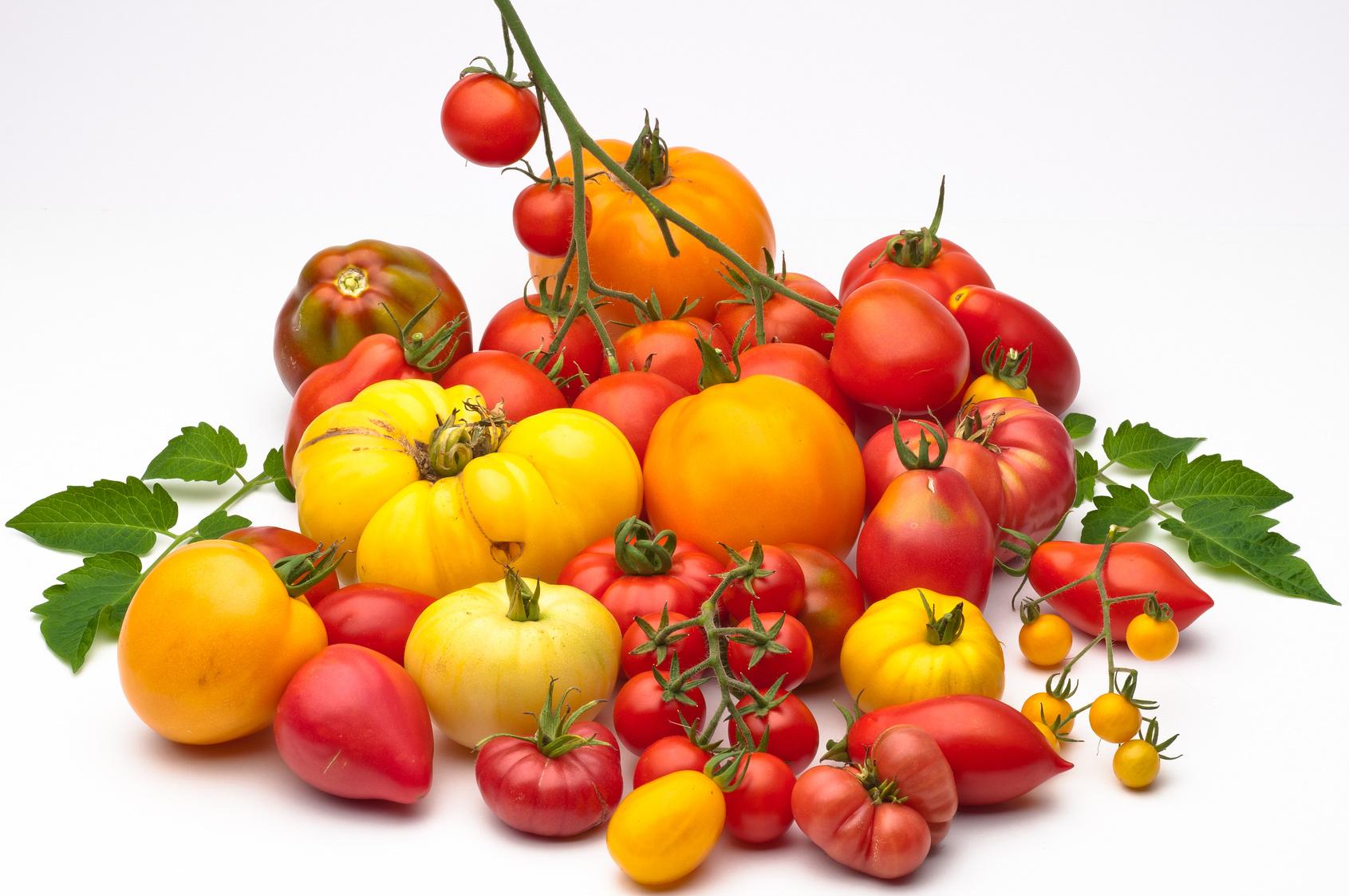 Fiche de renseignements sur les tomates