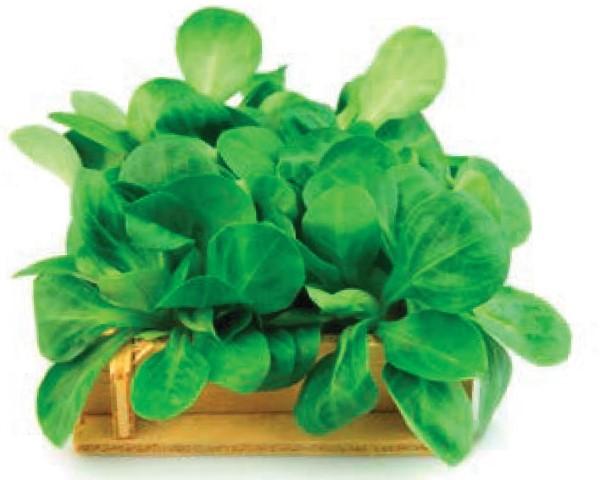 Feldsalat: Tipps von Ihrem Eist Uebst -Gärtner