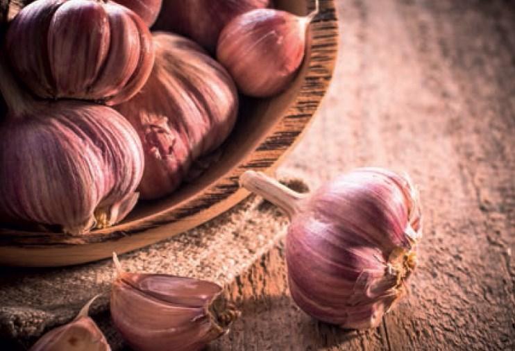 """Knoblauch Tipps von Ihrem """"Eist Uebst"""" -Gärtner"""