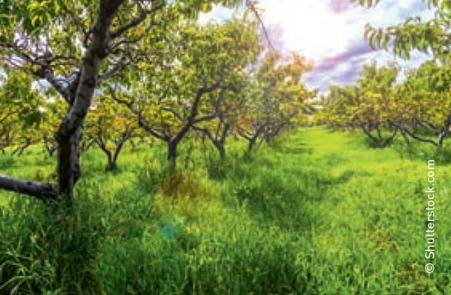"""Obstbäume veredeln Tipps von Ihrem """"Eist Uebst"""""""