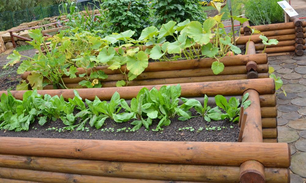 Der Gemüsegarten auf Balkon und Terrasse III