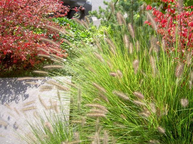 Blumen, Pflanzen und Gärten, Inspirationsquelle und Symbolkraft