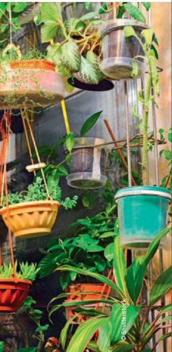 Zimmerpflanzen und Raumklima