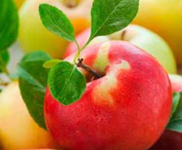 """Medizin vom Apfelbaum! One apple a day… :Tipps von Ihrem """"Eist Uebst""""- Gärtner"""